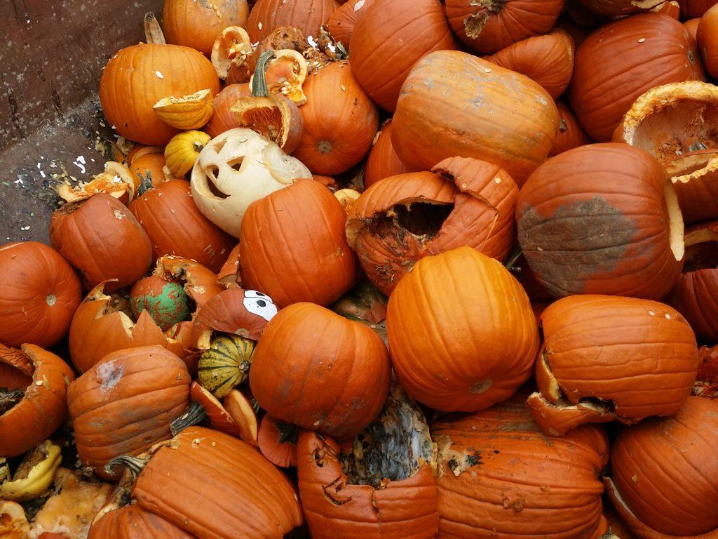 Wheaton Pumpkins 2