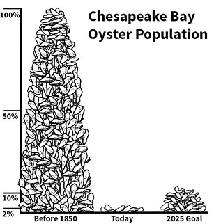 Source: http://oceancoveclams.com/