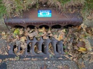 storm drain medallion