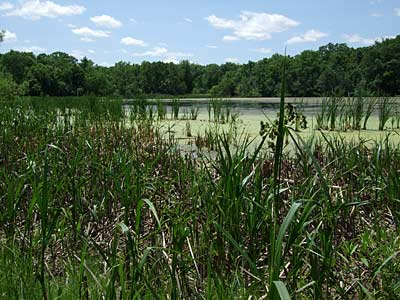 deer-grove-west-wetland